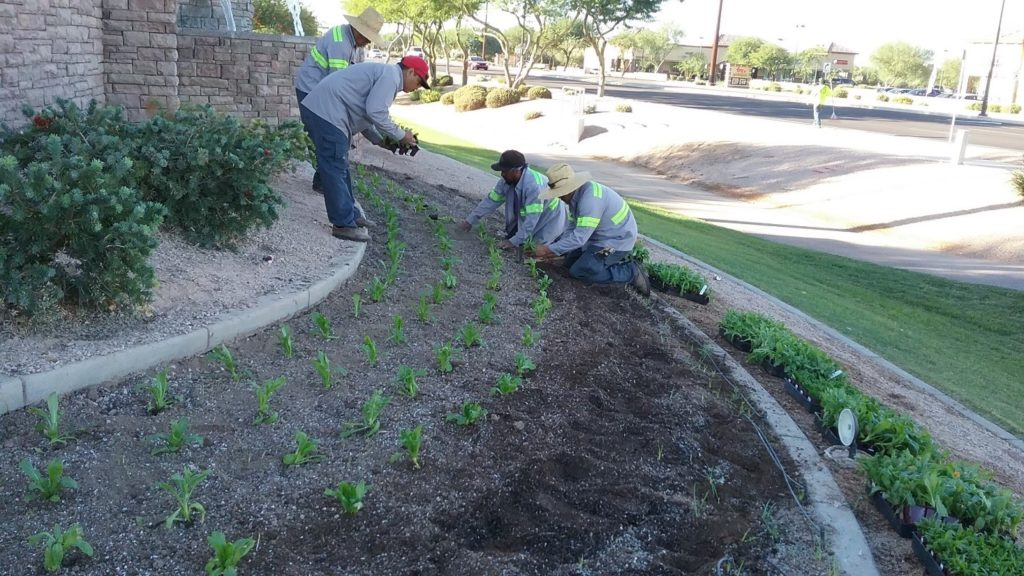 ELS Maintenance crew members planting fall annuals at the Seville Homeowners Association, October 2017.